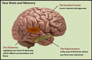 When Does Memory Loss Become A Serious Issue