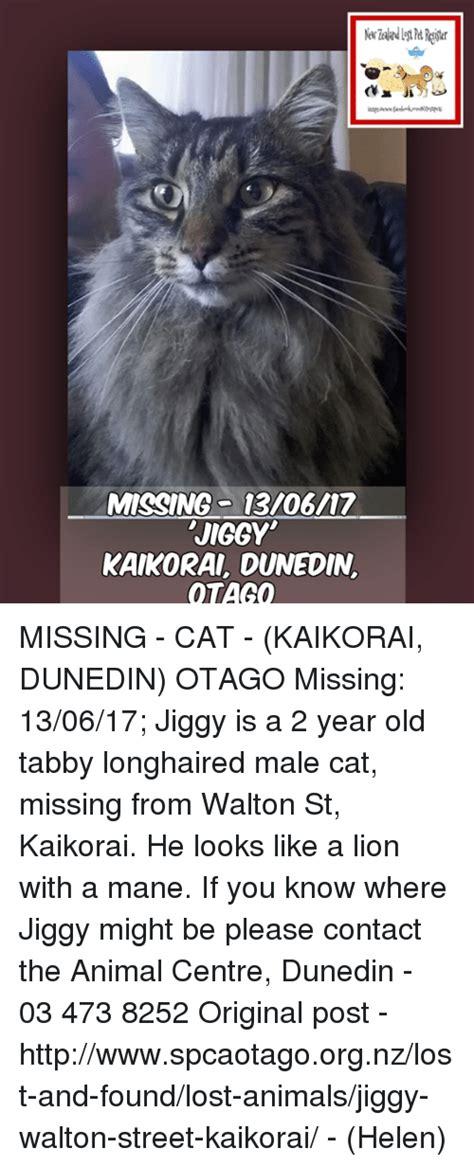 Lost Cat Meme - missing cat meme 28 images missing cat email chain