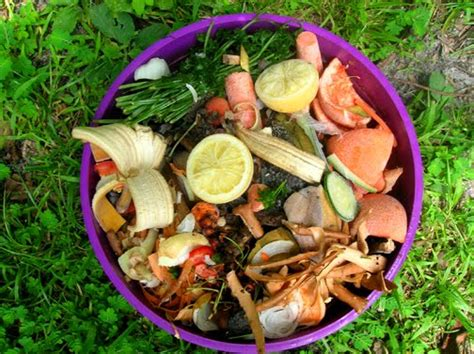 compost cuisine composting food