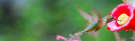 attracting hummingbirds it s time