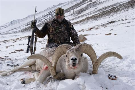 tajikistan marco polo sheep hunting