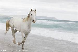 The gallery for --> White Horses Running On The Beach