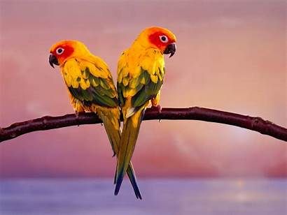 Birds Widescreen Desktop Bird Wallpapers Background Backgrounds