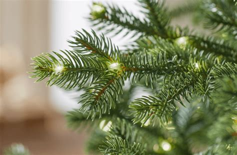 Grow An Edible Christmas Tree Centerpiece