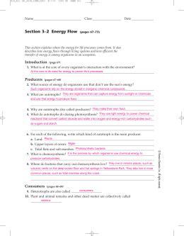 section 3 2 energy flow studylib net essys homework help flashcards research