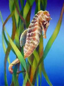 Seahorse I Among The Reeds by Nancy Tilles