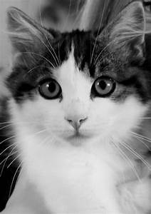 Black And White Cute Cats Pictures to Pin on Pinterest ...