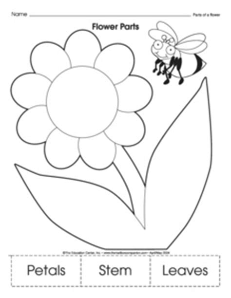 images  plant worksheets  kindergarten