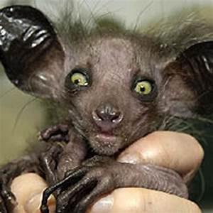 Top 10 Ugliest Creatures - Listverse