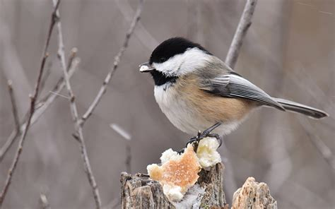 create  winter sanctuary  backyard birds huffpost
