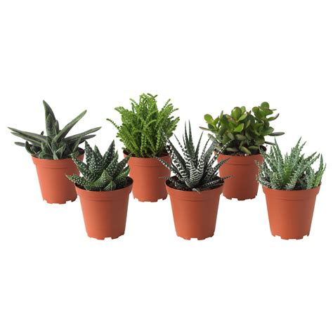 potted plants succulent potted plant assorted 9 cm ikea