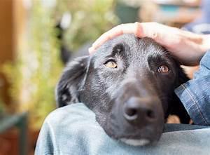 Flöhe Hund Mensch : hund mensch team tests zeigen warum hunde uns brauchen zooroyal magazin ~ Yasmunasinghe.com Haus und Dekorationen