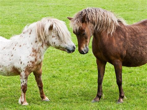 horses miniature pets things come community labs spalding know adorable being