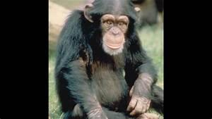 Top 10 most dangerous Omnivore Animals - YouTube