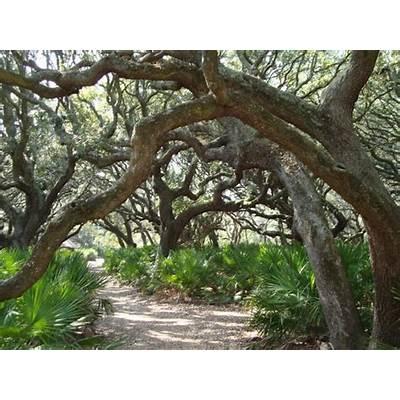 41 best DAY TRIP Cumberland Island GA images on Pinterest