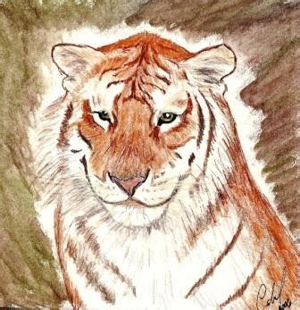 Gallery Wild Animals