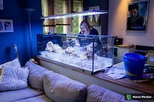 Aquarium Als Raumteiler : ein 400l raumteiler 150x50x50cm aquarium vorstellung ~ Michelbontemps.com Haus und Dekorationen