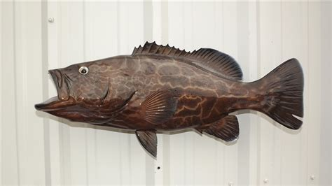 grouper fish mount code