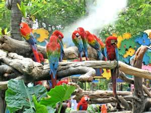 Green Garden Bench by A Flock Of Colorful Parrots In A Tropical Park Stock Photo