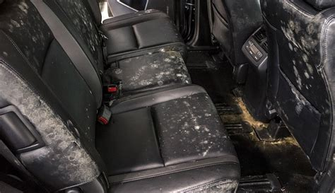 Car Mold Removal  Mildew Smell  Auto Detailing