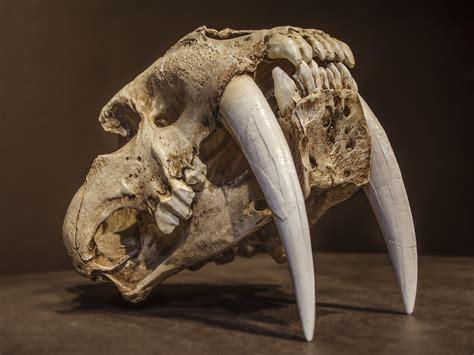 ice age giants climate change  human hunting created
