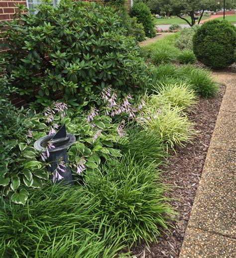 great border plants lisa earthgirl gardening tips and helpful advice gardening tips and helpful advice