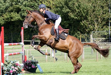 muscular horse athletic horses disorders places action kent mark via source flickr equimed ihearthorses horseback affordable riding ways