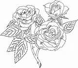 Coloring Roses Printable sketch template
