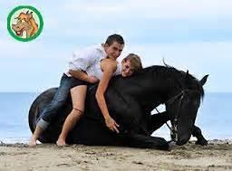 Pferd fett mähnenkamm