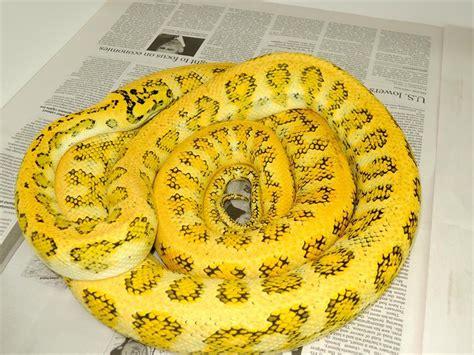 outdoor sound dening top 28 outdoor sound dening caramel jaguar carpet python carpet vidalondon ozite carpet rc