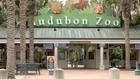 zoo audubon orleans animals jaguar escapes exhibit habitat exterior