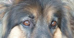 Good For Dogs  Sebaceous Cysts