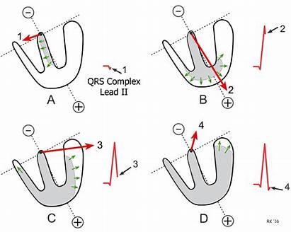 Ventricular Depolarization Axis Electrical Mean Vectors Sequence