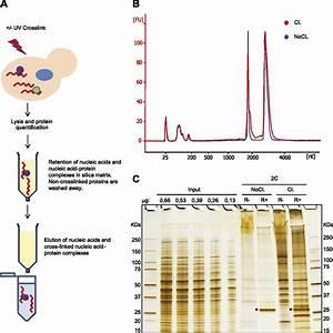 Download Scientific Diag Formal Representation | Idade Media
