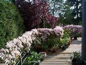 Welche Pflanzen Für Balkon : welche pflanzen f r balkon seite 1 terrasse balkon ~ Michelbontemps.com Haus und Dekorationen