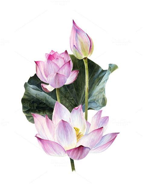 655 Best Lotus Images On Pinterest  Lotus Flowers