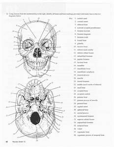 51 Skull Labeling Worksheet  Skull Anatomy Worksheets Quotes
