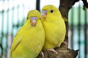 images of love birds and wallpaper
