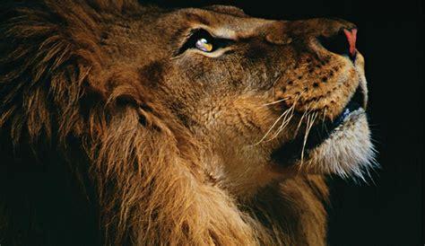 SEAH® Jewelry for Leo zodiac sign – Seah® LLC