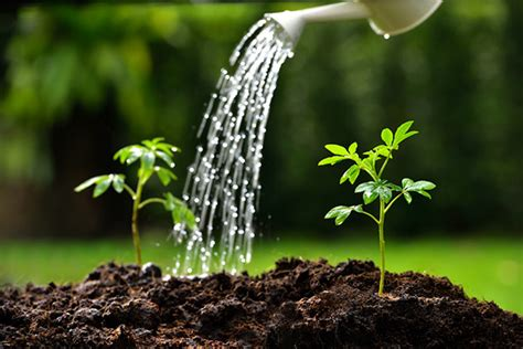 pictures of watering plants why do plants need water we have answers