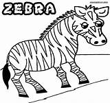 Zebra Coloring Pages Sheet Animal Colorings Coloringway sketch template