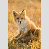 White Baby Arctic Fox | 867 x 1300 jpeg 171kB