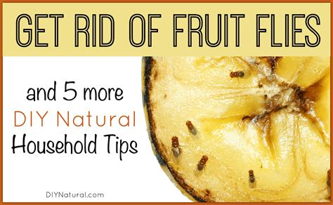 rid  fruit flies    diy natural home solutions