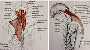 Neck Pain Relief Using Acupressure Points  Aculife - Stephen Lee