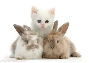 Cute Baby Kittens and Bunnies