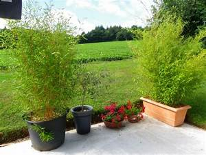 marvelous bac pour bambou terrasse 8 phyllostachys With bac pour bambou terrasse
