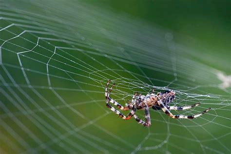 la r 233 sistance des toiles d araign 233 es ne tient pas qu 224 leurs fils sciences