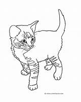 Coloring Cat Pages Kittens Tabby Kitten Cute Drawing Print Colouring Cats Printable Sheet Drawings Little Touch Clip Standing Striped Funny sketch template