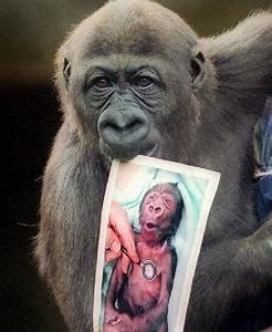 17+ images about Primates on Pinterest | Conservation ...