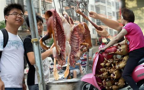 chinese officials hounded  activists  dog eating
